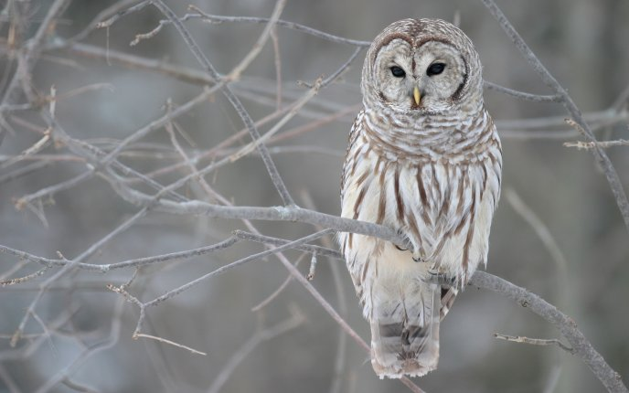 White owl on a tree branch