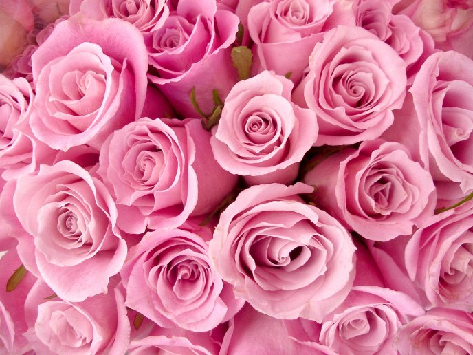 beautiful bouquet of pink roses, Beautiful flower