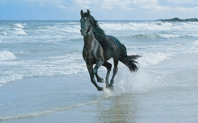 Download Wallpaper A black horse running on the beach