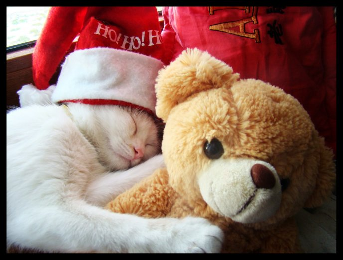Download Wallpaper Cat sleeping with it's teddy bear - Christmas Ho Ho Ho!
