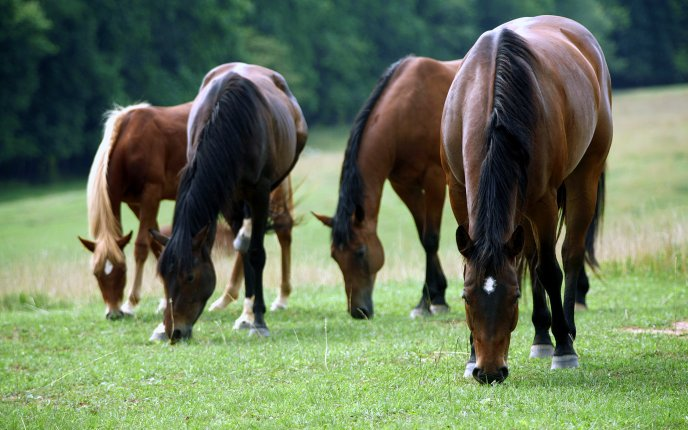 Image result for horses grazing in a field