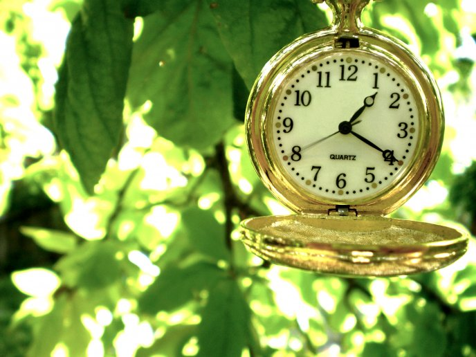 Golden pocket clock hanging in a tree HD wallpaper