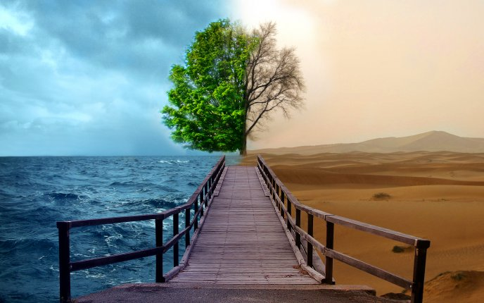 Download Wallpaper Ocean versus Desert - greened tree versus dry tree