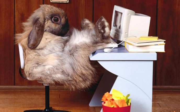 Download Wallpaper Fluffy rabbit on the office HD wallpaper