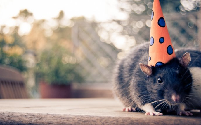 A small mouse with birthday hat HD wallpaper
