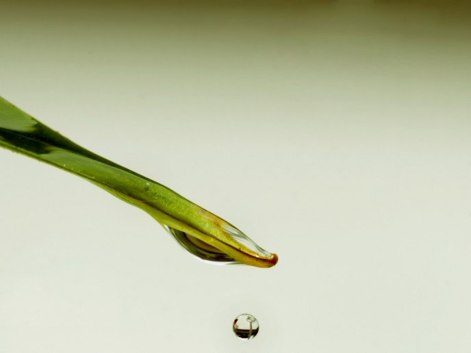 One drop of water dripping off a blade of grass