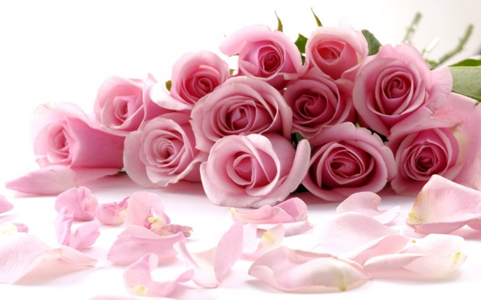 Gorgeous Wallpaper a gorgeous bouquet of pink roses hd wallpaper