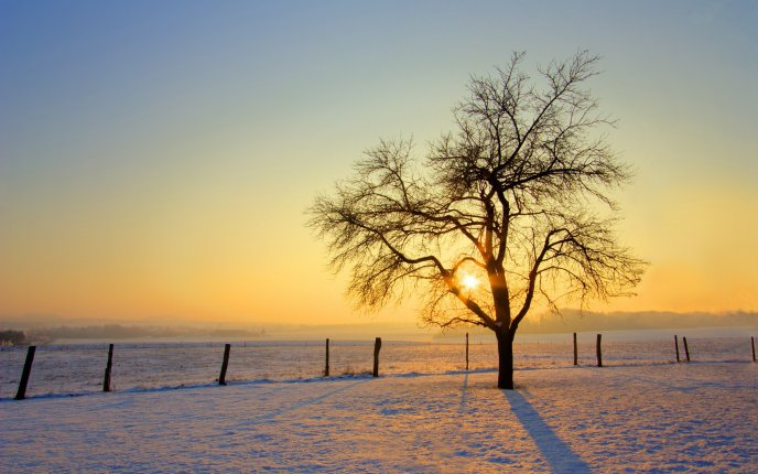 Sunrise over a snowy field HD wallpaper