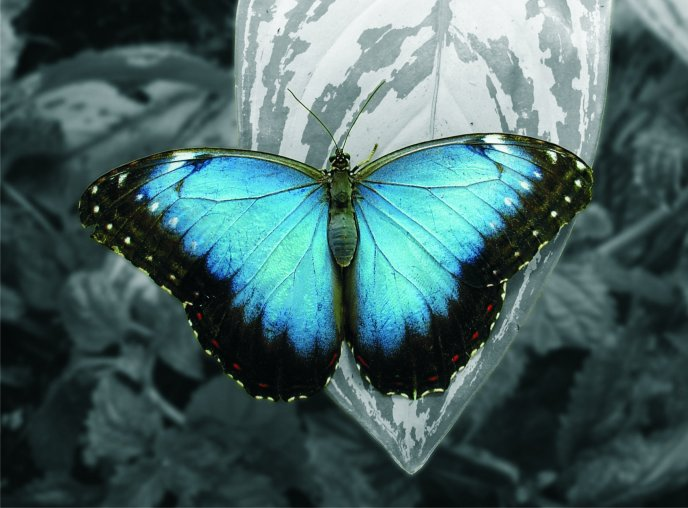 A beautiful butterfly with blue wings