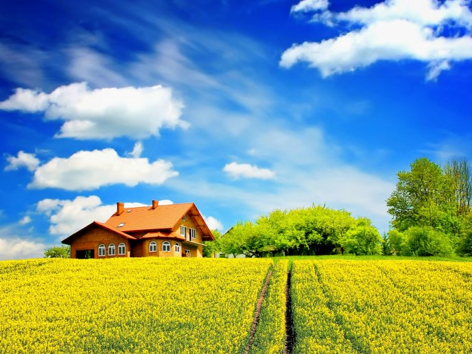 Beautiful yellow field in front of the house