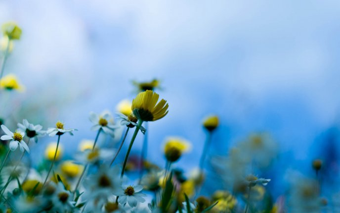 Artistic HD wallpaper - spring flower