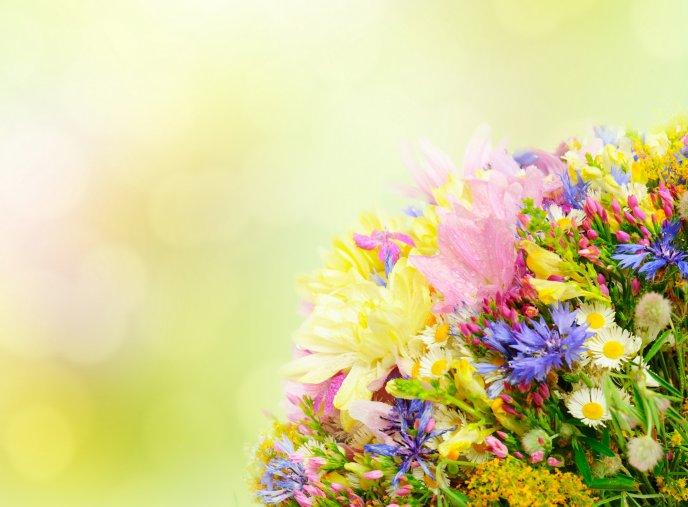 Bouquet of spring flowers fresh perfume mightylinksfo Gallery