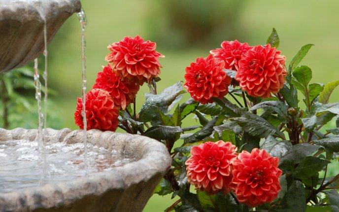 flowers love water  hd wallpaper, Natural flower