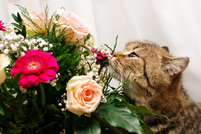 Sweet cat eating flowers