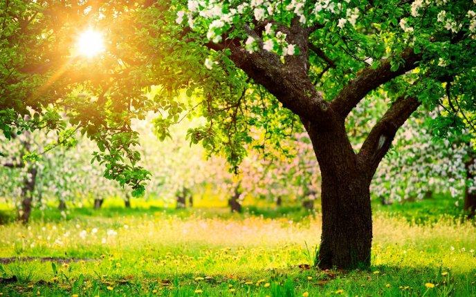 Blossom Garden Hd Wallpaper