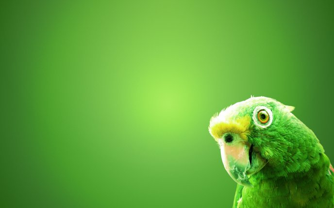 Green parrot on a green wall - HD wallpaper