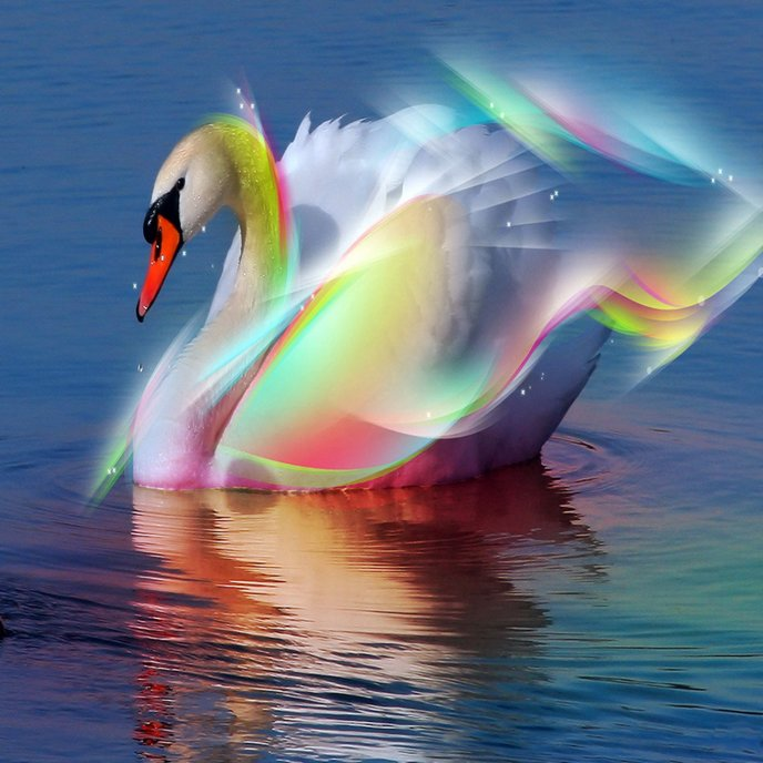 A beautiful swan shining like a rainbow