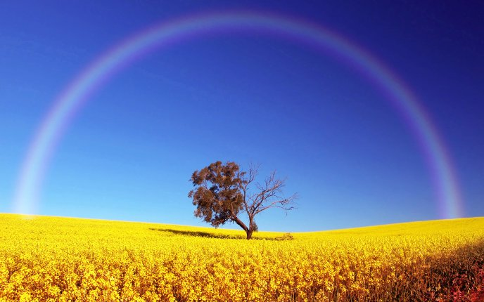 Rainbow in a perfect semicircle - tree on a field