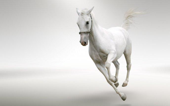 Beautiful Running White Horse Wallpapers Beautiful White Horse Running