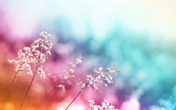 Colorful abstract background and flowers in front