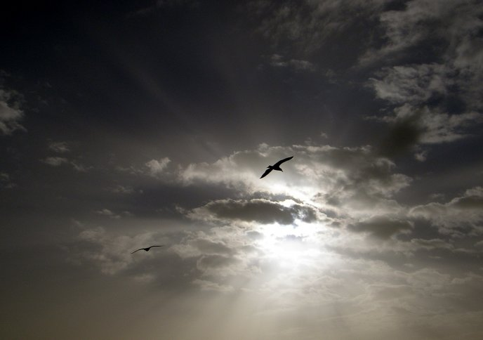 Birds fly to the sky - sunbeams out of the clouds