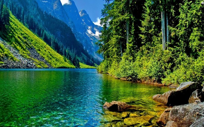 Green Water On A Wonderful Green Nature Hd Wallpaper