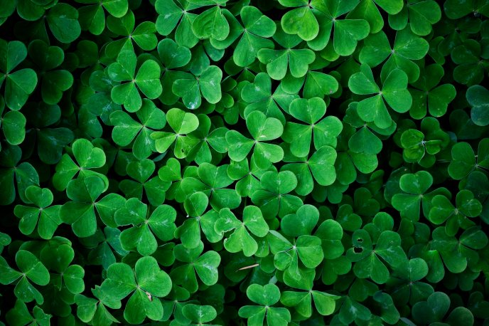 Green Leaf Clover Wall