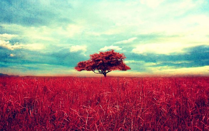 Retro red tree and a beautiful wheat field