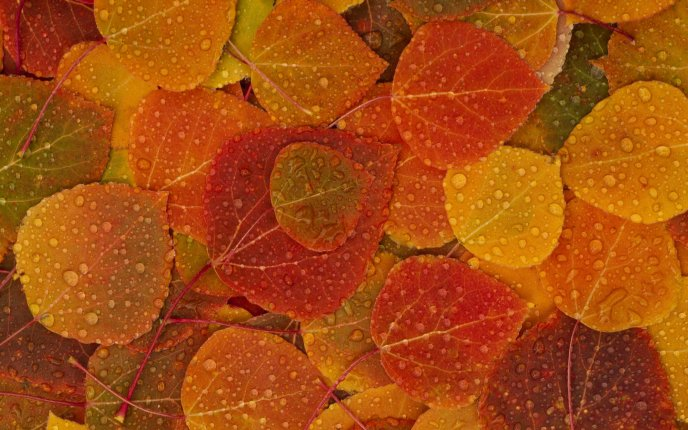 Autumn carpet on the wall full with water drops