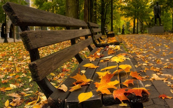 Beautiful Autumn Leaves On The Benches In The Park