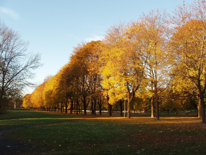 Autumn sunny day is a park in Oslo - HD wallpaper