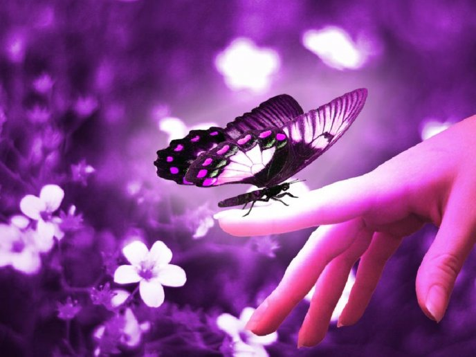 The love of a Butterfly - HD purple wallpaper