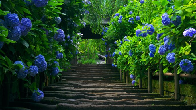 Flower Garden Path path to the flower garden - hd wallpaper