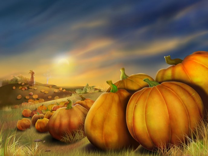 Download Wallpaper Pumpkins on a field - autumn picture