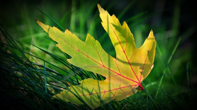 Download Wallpaper The life of a leaf - beautiful part of nature