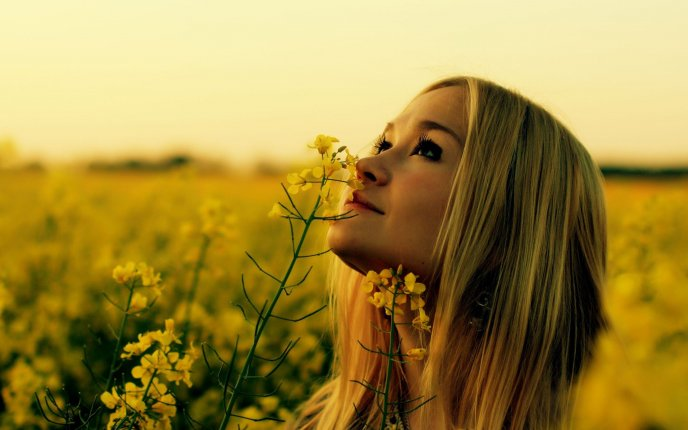 Download Wallpaper Beautiful blonde girl on a field full with yellow flowers