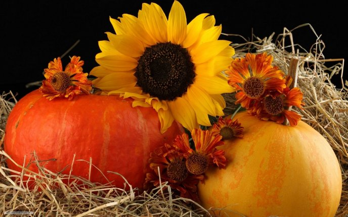 Sunflowers and delicious pumpkins - HD wallpaper