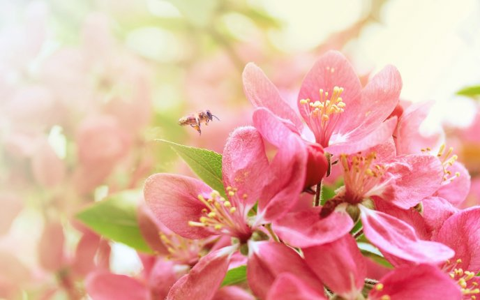 Beautiful pink flowers - symbol of the spring - Free Image Download ...