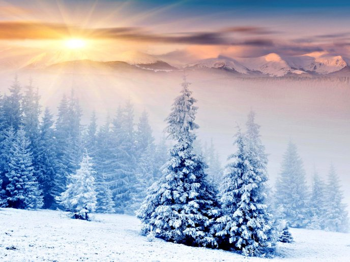 Beautiful sunlight over the white nature - winter is here