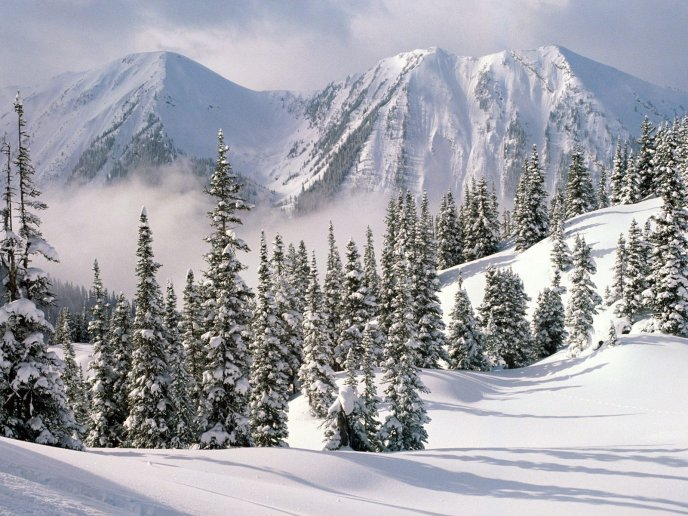 Big mountains full with snow - winter landscape