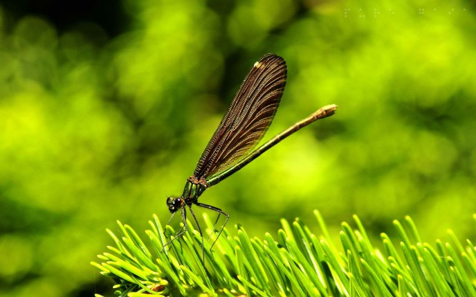 Big beautiful insect on the green plant - HD macro wallpaper