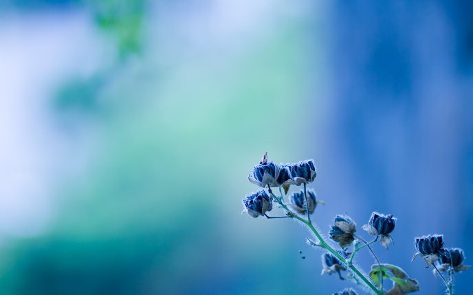 Beautiful blue spring flowers - HD wallpaper