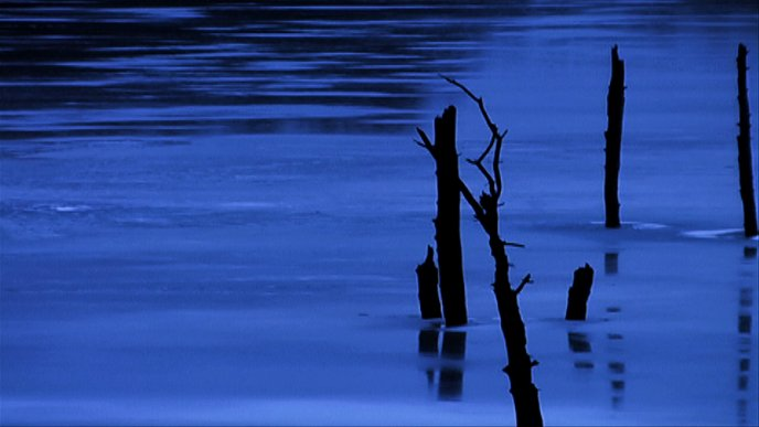 Tree branches in the cold lake - HD wallpaper