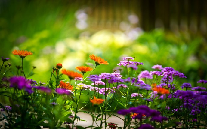 Little Spring Flowers On The Garden Hd Wallpaper