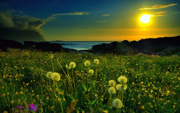 Beautiful dandelion in the sunset - magic spring time