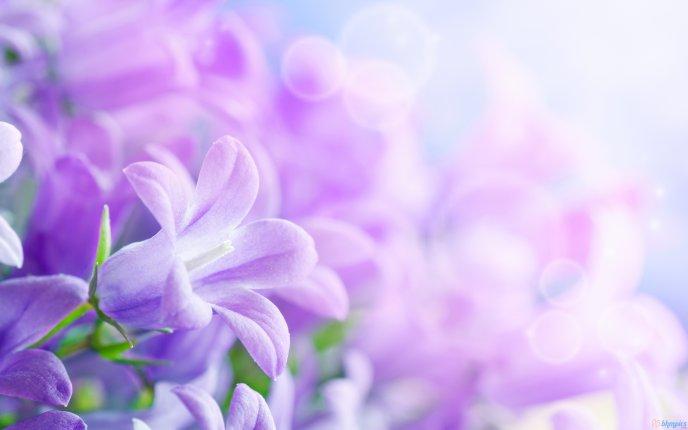Beautiful purple spring flowers hd wallpaper mightylinksfo