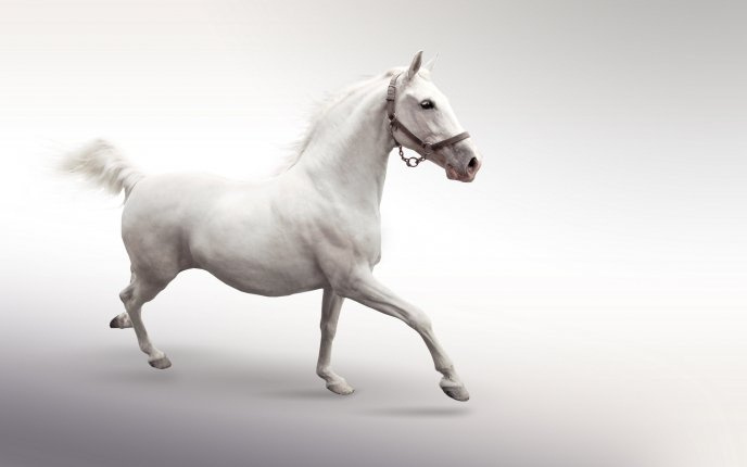 White Horse On A White Background