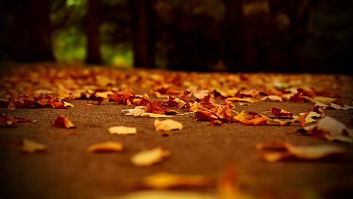 Download Wallpaper Beautiful autumn cover - hundreds of leaves on the path