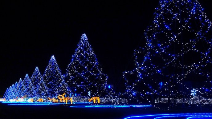 Blue Christmas trees - magic night