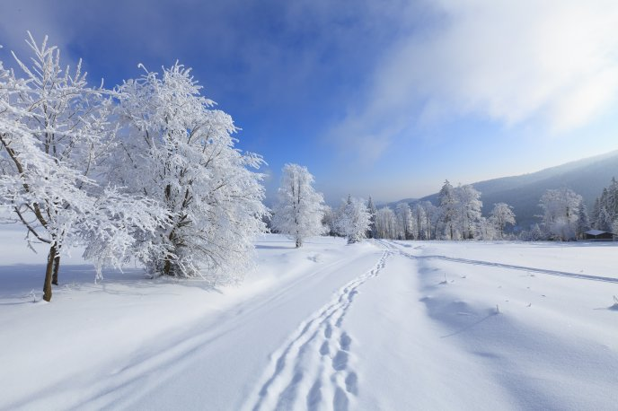 Footprints In The Snow Hd Winter Wallpaper